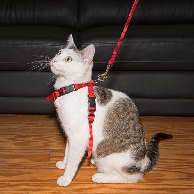 Szelki samochodowe dla kota Trixie
