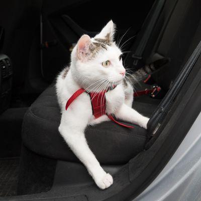 Trixie Auto-Geschirr für Katzen