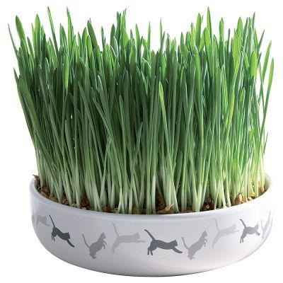 Trixie ceramiczna miska z trawą dla kota