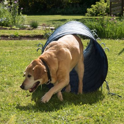Dog Agility Tunnel For Sale Uk