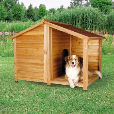 Dogs For Small Houses Uk