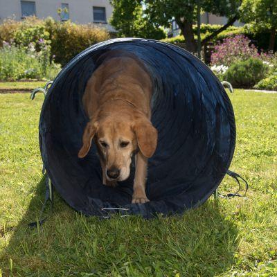 Tunnel rigido Agility dog