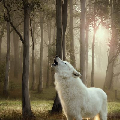 Wolf of Wilderness Blik 1 x 400 g Hondenvoer