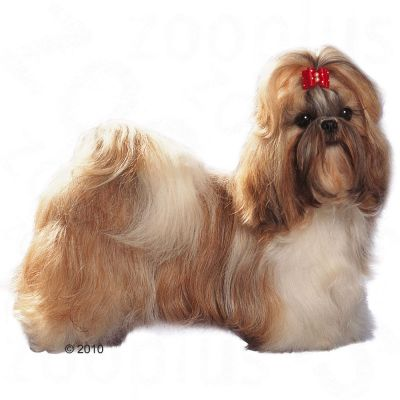 shih tzu feeding royal canin shih tzu adult buy now at zooplus 3947